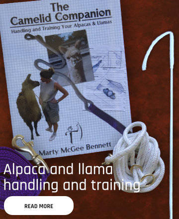 Alpaca and llama handling and training equipment